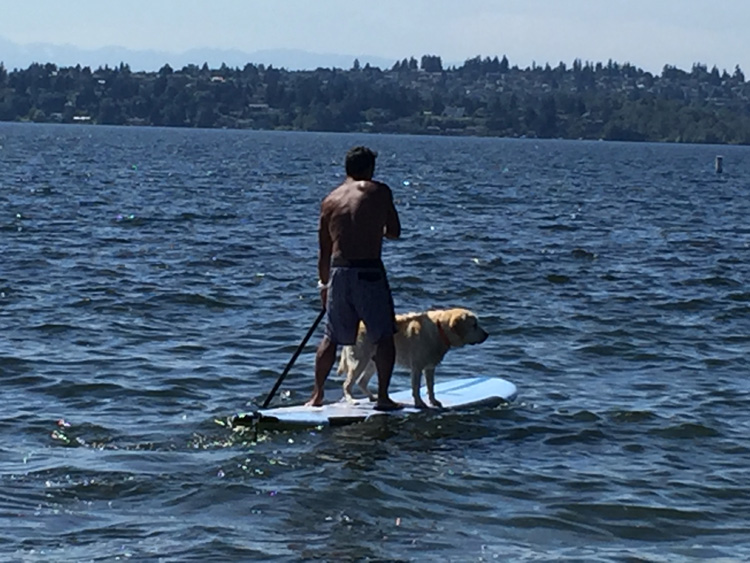 Dog's first steps to riding on SUP board