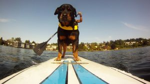 Get you dog out on the water for a ride